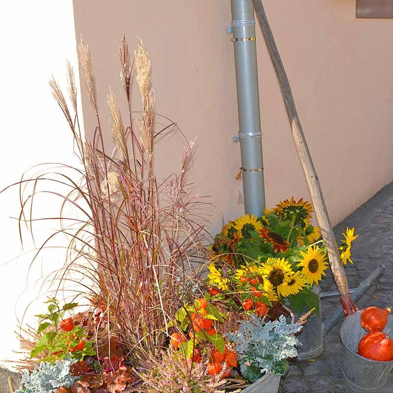 hofgarten-sonnenblumen